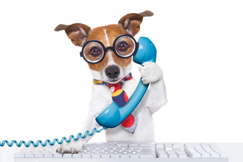 dog talking on phone